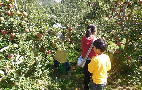 収穫&農業体験